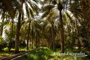 Al Mudayrib Oasis, Sultanat of Oman, Arabic Peninsula