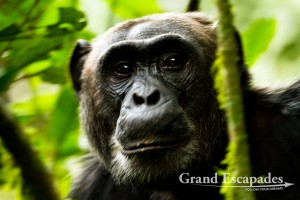 Uganda – Photo Gallery