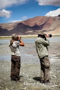 Gilles & Yann spoting Ladakhi wildlife, Tso Kar, Ladakh, Indi