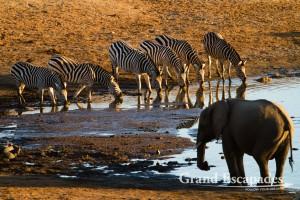Burchell's Zebra (Equus Burchellii) & African Elephant (Loxodonta Africana), Masuma Dam, Hwange National Park (Sinamatella Camp Area), Zimbabwe, Africa