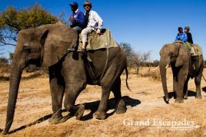 Training & Riding Elephants, Antelope Park, near Gweru, Zimbabwe, Africa