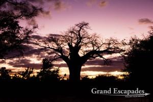Gonarezhou National Park, Zimbabwe, Africa