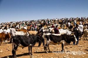 Cattle Market, Aksum, Ethiopia