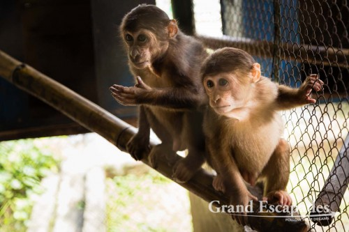 Wildlife Rescue Center, Phong Nha - Ke Bang National Park, Phong Nha, Vietnam,