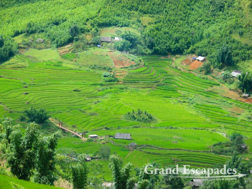 Rice Terraces near SaPa, in the Summer, North Vietnam