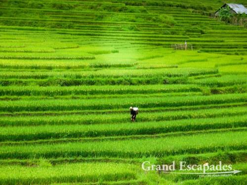 Rice Terraces near SaPa, in the Summer, North Vietnam