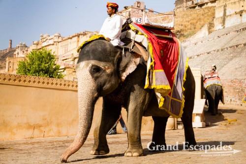 Jaipur-115