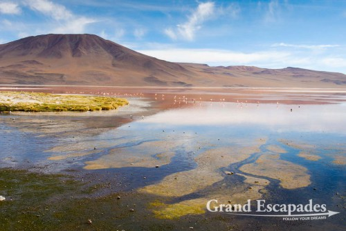 Laguna Colorada, South West Bolivia, South America