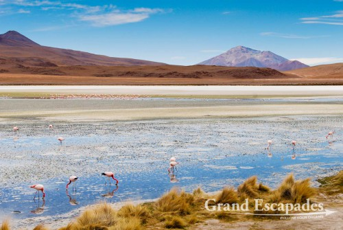 Andean Flamingos (Phoenicopterus Andinus), Laguna Colorada, South West Bolivia, South America