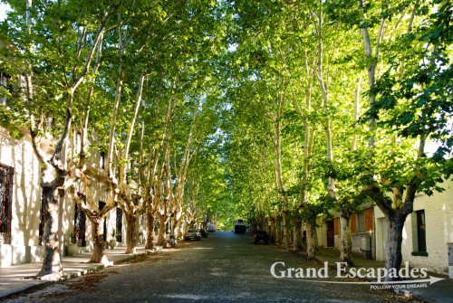 All streets are lined by gigantic plane trees. These function like an air-conditioning and provide so much shades that you can stroll around the city even in the afternoon, when the sun is burning down! Old Colonial City of Colonia, Uruguay