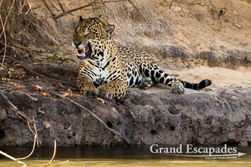 Jaguar, Porto Jofre, Northern Pantanal, Brazil