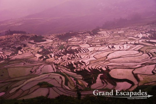Rice Terrasses of Yuanyang (here in Duoyishu), Yunnan, China