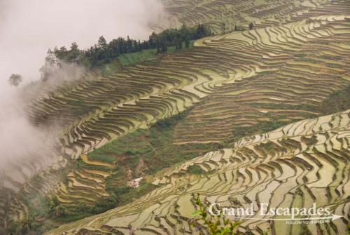 Rice Terrasses of Yuanyang, Yunnan, China
