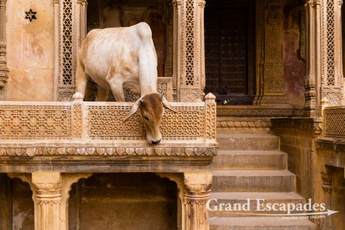 In the streets of Jaisalmer, Rajasthan, India