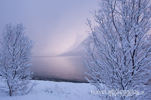 winterlandscape with fjord